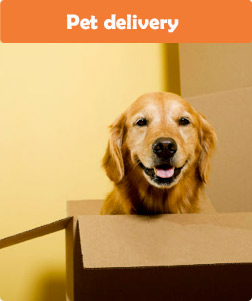 Pet delivery petglobals