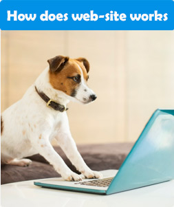 How does web-site Pet