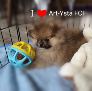 Photo №2 to announcement № 1256 for the sale of pomeranian - buy in Poland