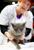 Photo №2 to announcement № 8696 for the sale of british shorthair - buy in Slovakia