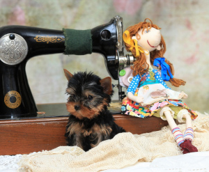 Photo №3. IN THE KENNELS & quot; SNOW CAROUSEL & quot; AVAILABLE FOR SALE PUPPY. Russian Federation