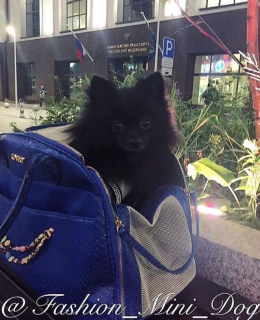 Photo №3. Bag-carrying in which your dog will be very comfortable! in Russian Federation