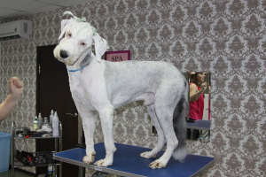 Photo №2. Service of the groomer in Georgia. Price - 30$. Announcement № 662