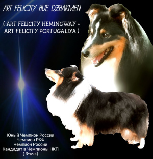Photo №4. I will sell shetland sheepdog in the city of Kazan. private announcement - price - 342$