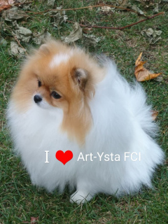 Photo №4. I will sell pomeranian in the city of Torun.  - price - 1554$