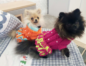 Photo №1. KNITTED DRESS (CLOTHES) FOR DOGS AND CAT ORDER in the city of Minsk. Price - 10$. Announcement № 6791